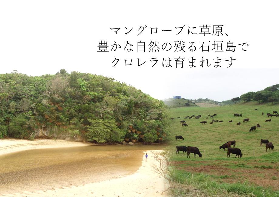 マングローブに草原、豊かな自然の残る石垣島でクロレラは育まれます